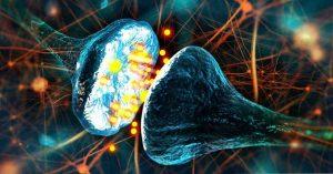 Нейриты и синапсы