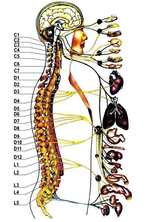 zabolevaniya-pozvonochnika-simptomy
